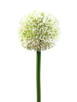 EUROPALMS Allium spray, cream, 55cm