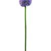 EUROPALMS Allium spray, lavender, 55cm