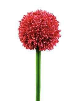 EUROPALMS Allium spray, red, 55cm