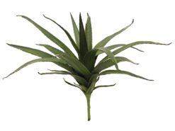 EUROPALMS Aloe (EVA), green, 50cm
