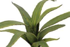 EUROPALMS Aloe (EVA), green, 66cm