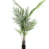 EUROPALMS Areca palm with big leaves, 165cm