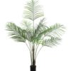 EUROPALMS Areca palm with big leaves, 185cm