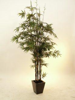 EUROPALMS Bamboo black trunk, 240cm
