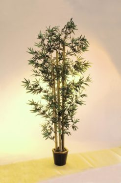 EUROPALMS Bamboo with natural trunks, 225cm