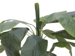 EUROPALMS Banana tree, 170cm