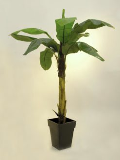 EUROPALMS Banana tree, 220cm