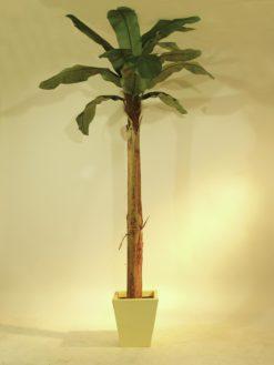 EUROPALMS Banana tree, 270cm