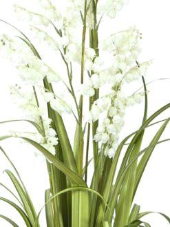 EUROPALMS Bellflower, white, 105cm