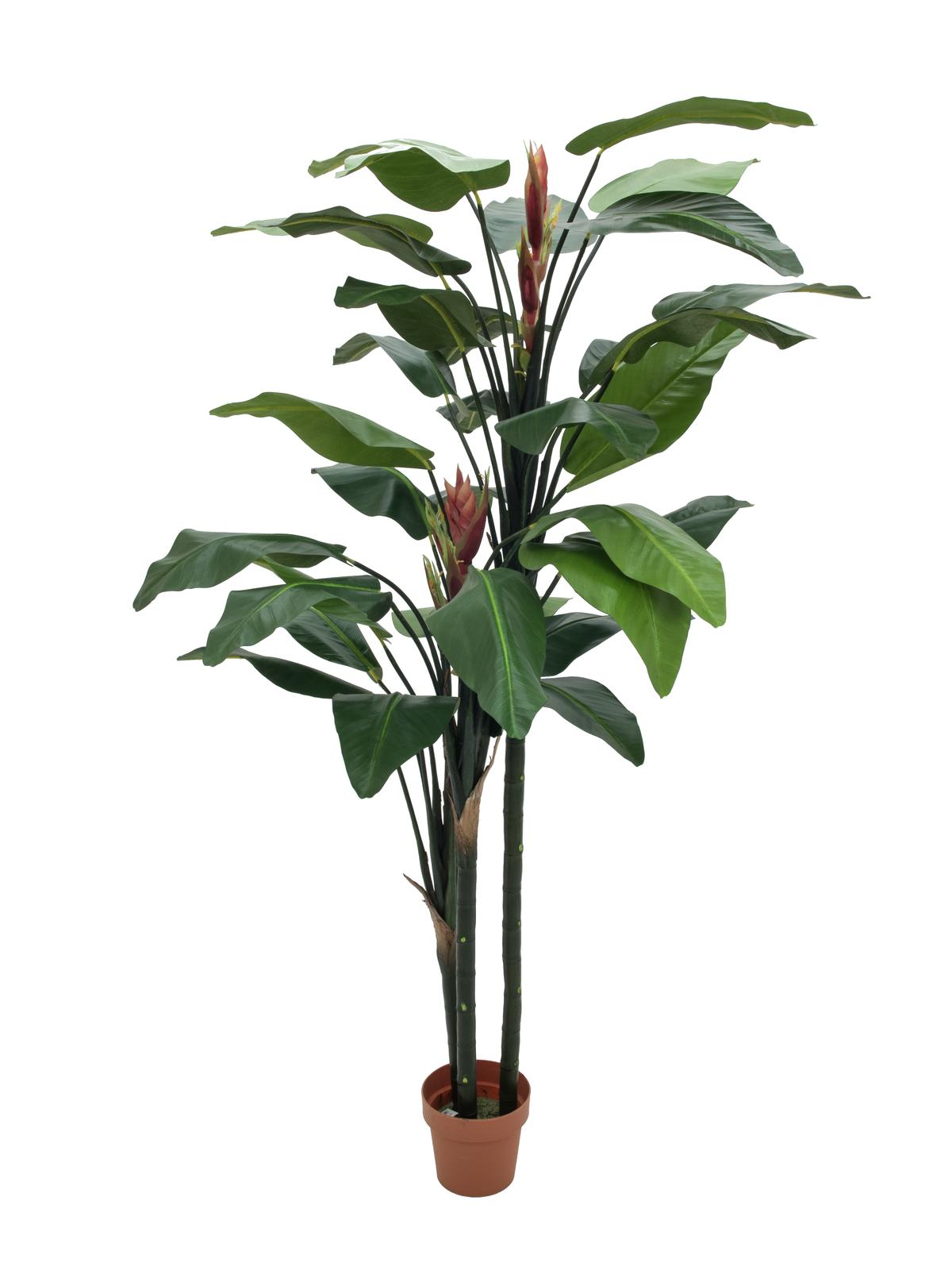 Europalms bird of paradise flower 220cm su for Bougainvillea bonsai prezzo