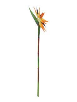 EUROPALMS Bird-of-paradise spray, orange, 95cm