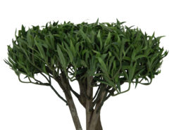 EUROPALMS Bonsai tree, multi trunk, 130cm