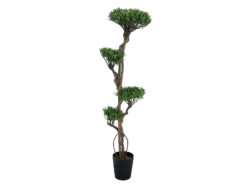 EUROPALMS Bonsai tree, multi trunk, 170cm