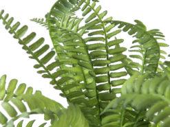 EUROPALMS Boston fern in pot, 28 cm