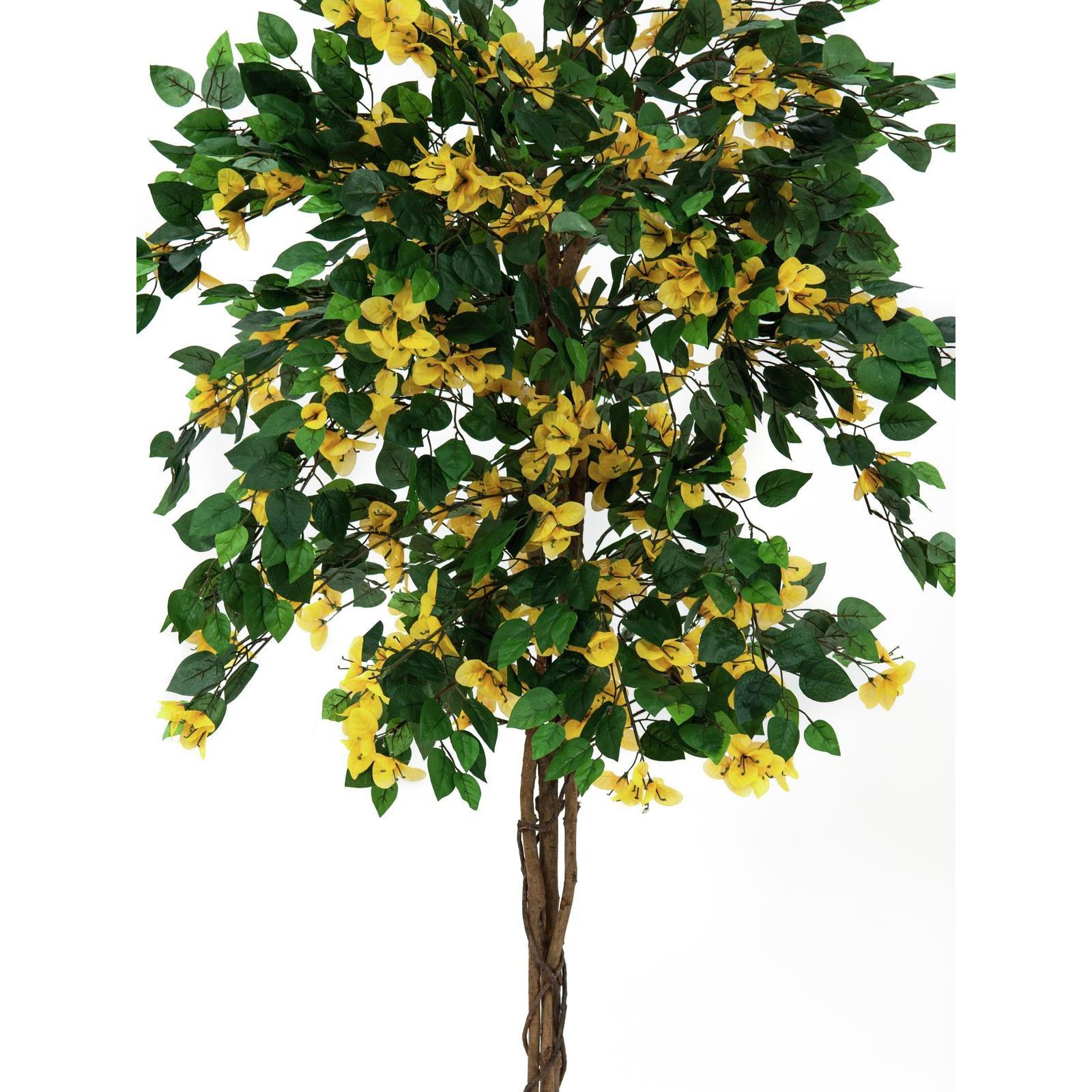 Europalms bougainvillea yellow 150cm su mondospettacoli for Bougainvillea bonsai prezzo