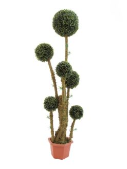 EUROPALMS Box ball tree, 163cm