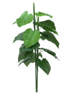 EUROPALMS Caladium plant, 90cm