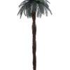EUROPALMS Cycus palm tree 210cm