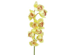 EUROPALMS Cymbidium spray, yellow, 90cm