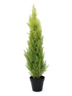 EUROPALMS Cypress, Leyland, 90cm