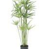 EUROPALMS Cyprus grass, 76cm