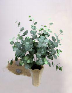 EUROPALMS Eucalyptus bush, 50cm