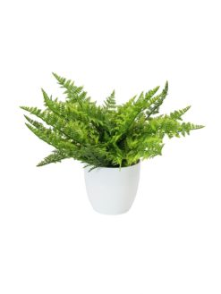 EUROPALMS Fern bush in pot, 22 leaves, 33cm