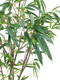 EUROPALMS Ficus Longifolia, thick trunk, 180cm