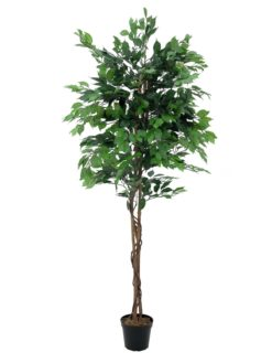 EUROPALMS Ficus Tree Multi-Trunk, 210cm