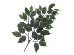 EUROPALMS Ficus spray 12x