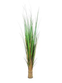 EUROPALMS Fox grass, 150cm