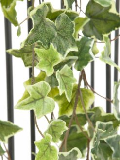 EUROPALMS Holland Ivy garland embossed 180cm