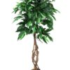 EUROPALMS Jungle tree Mango, 150cm