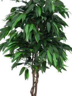 EUROPALMS Jungle tree Mango, 180cm