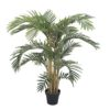 EUROPALMS Kentia palm tree, 140cm