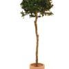 EUROPALMS Laure ball tree, 180cm