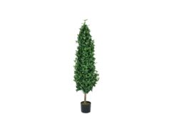 EUROPALMS Laurel Cone Tree, 150cm