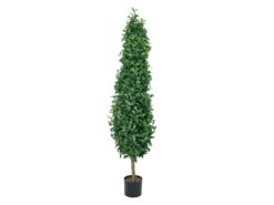 EUROPALMS Laurel Cone Tree, 180cm