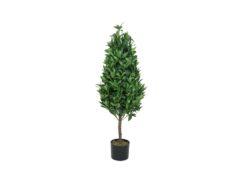 EUROPALMS Laurel Cone Tree, high trunk, 120cm