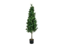 EUROPALMS Laurel Cone Tree, high trunk, 180cm