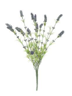 EUROPALMS Lavender bush 61cm