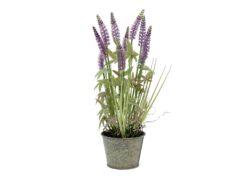 EUROPALMS Lavender grass, 46cm