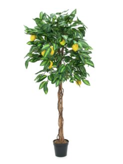 EUROPALMS Lemon tree, 150cm