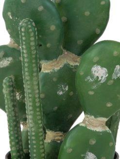 EUROPALMS Mixed cactuses, 54cm