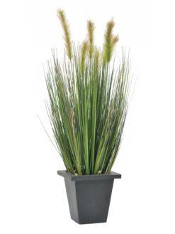 EUROPALMS Moor-grass in pot, 60cm