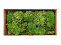 EUROPALMS Moss ball greenapple 10x