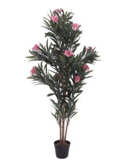 EUROPALMS Oleander tree, pink, 150 cm