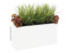 EUROPALMS Onion grass bush, 66cm