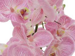 EUROPALMS Orchid Arrangement EVA, purple