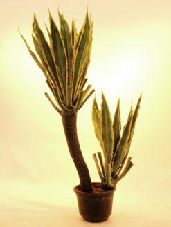 EUROPALMS Orchid-Cactus, 160cm